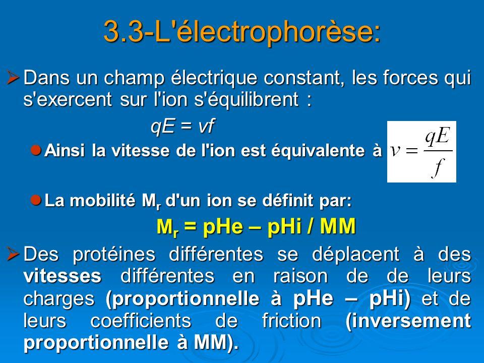 3.3-L'électrophorèse: Dans un champ électrique constant, les forces qui s'exercent sur l'ion s'équilibrent : Dans un champ électrique constant, les fo