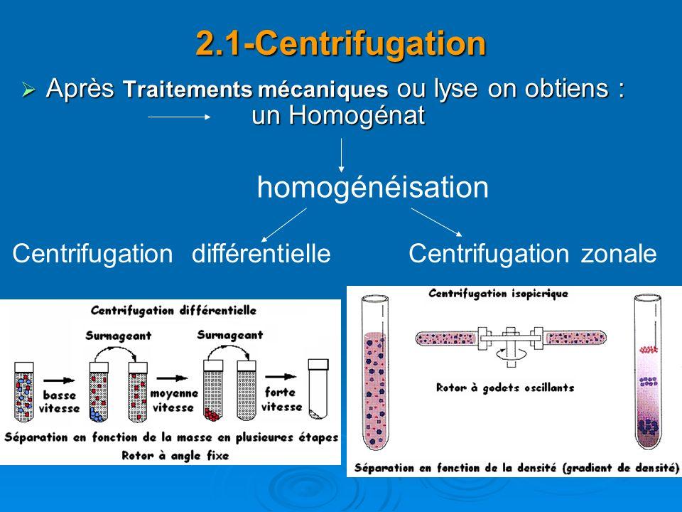 2.1-Centrifugation Après Traitements mécaniques ou lyse on obtiens : Après Traitements mécaniques ou lyse on obtiens : homogénéisation Centrifugation