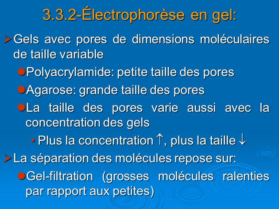 Gels avec pores de dimensions moléculaires de taille variable Gels avec pores de dimensions moléculaires de taille variable Polyacrylamide: petite tai