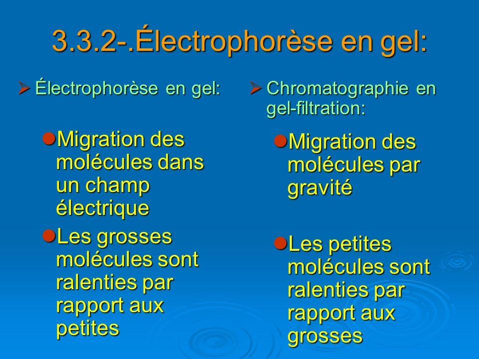 3.3.2-.Électrophorèse en gel: Électrophorèse en gel: Électrophorèse en gel: Migration des molécules dans un champ électrique Migration des molécules d