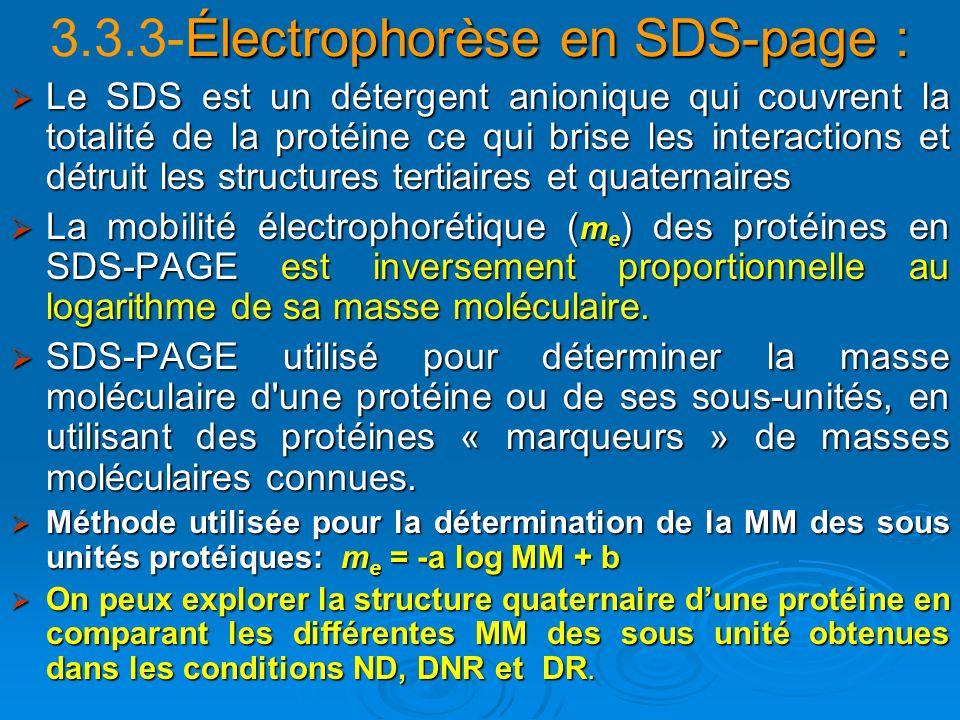 Électrophorèse en SDS-page : 3.3.3-Électrophorèse en SDS-page : Le SDS est un détergent anionique qui couvrent la totalité de la protéine ce qui brise