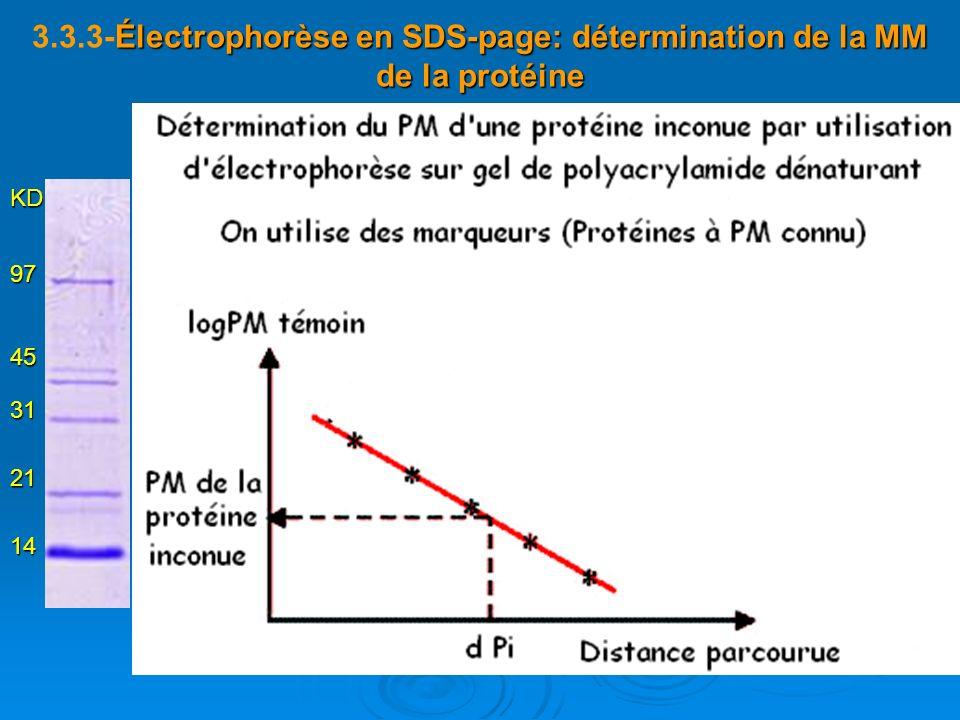 Électrophorèse en SDS-page: détermination de la MM de la protéine 3.3.3-Électrophorèse en SDS-page: détermination de la MM de la protéine 14 21 31 45