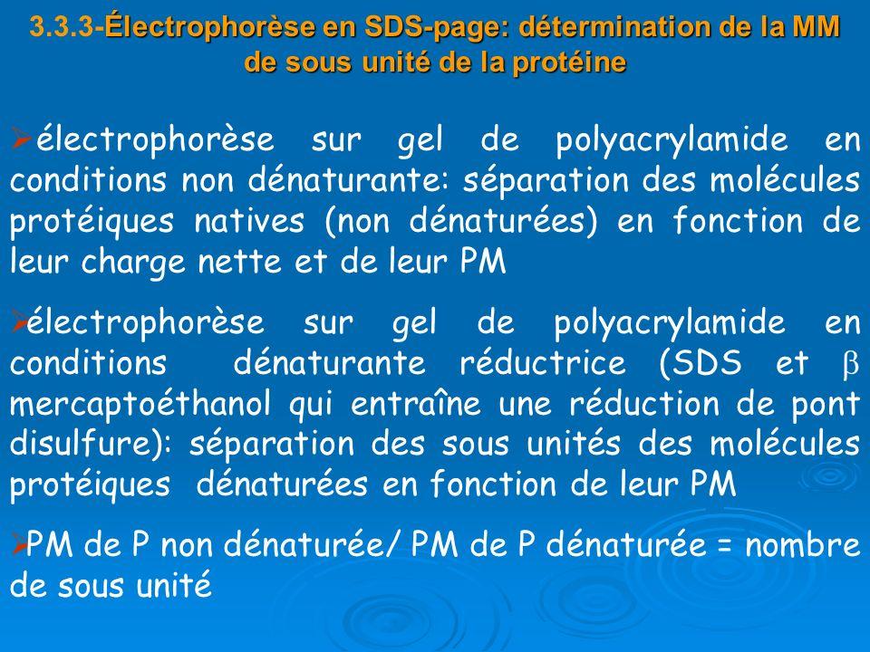 Électrophorèse en SDS-page: détermination de la MM de sous unité de la protéine 3.3.3-Électrophorèse en SDS-page: détermination de la MM de sous unité