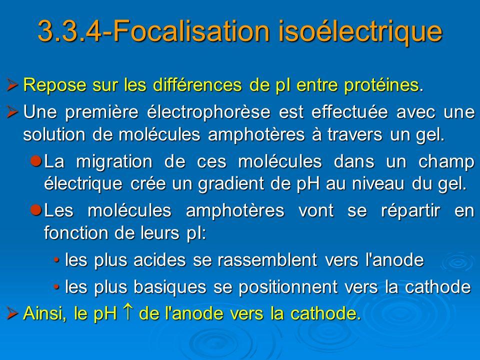 3.3.4-Focalisation isoélectrique Repose sur les différences de pI entre protéines. Repose sur les différences de pI entre protéines. Une première élec