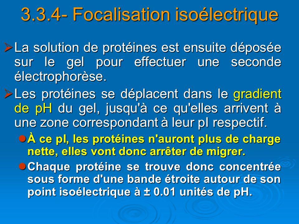 3.3.4- Focalisation isoélectrique La solution de protéines est ensuite déposée sur le gel pour effectuer une seconde électrophorèse. La solution de pr