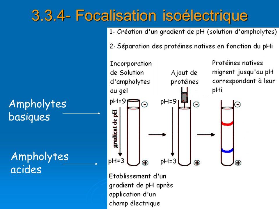 3.3.4- Focalisation isoélectrique Ampholytes basiques Ampholytes acides