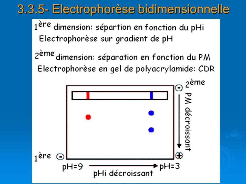 3.3.5- Electrophorèse bidimensionnelle