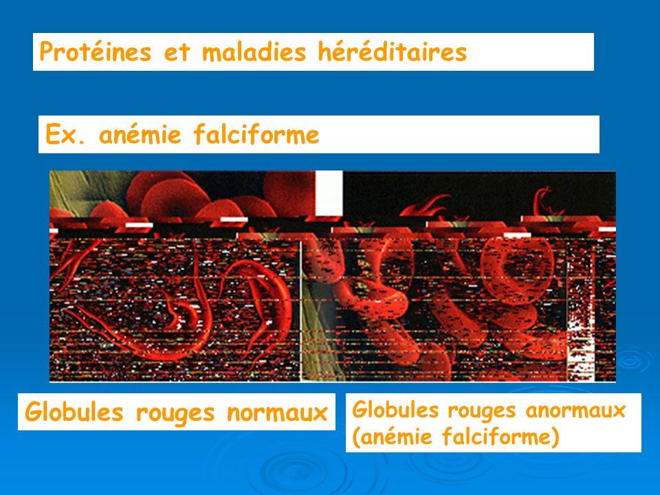 Protéines et maladies héréditaires Ex. anémie falciforme Globules rouges normaux Globules rouges anormaux (anémie falciforme)