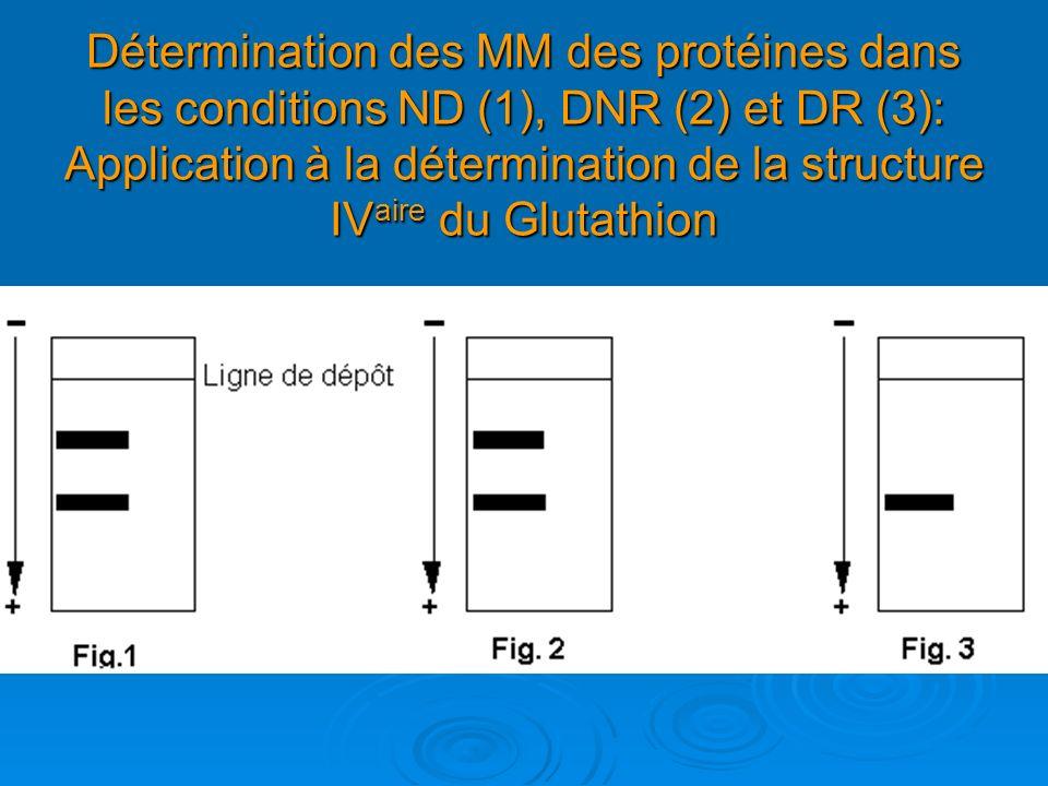 Détermination des MM des protéines dans les conditions ND (1), DNR (2) et DR (3): Application à la détermination de la structure IV aire du Glutathion