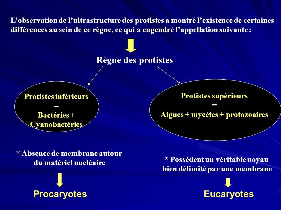 Règne des protistes Protistes inférieurs = Bactéries + Cyanobactéries Protistes supérieurs = Algues + mycètes + protozoaires Lobservation de lultrastr