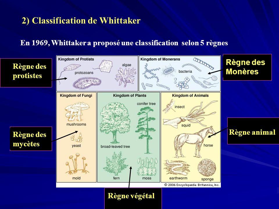 2) Classification de Whittaker En 1969, Whittaker a proposé une classification selon 5 règnes Règne des Monères Règne animal Règne végétal Règne des m