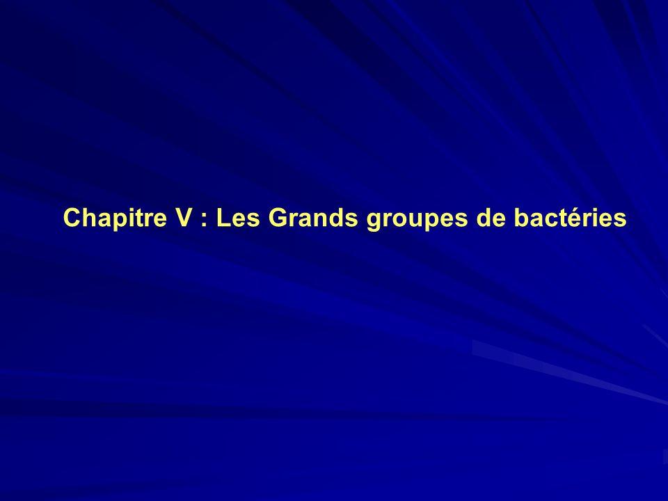 Chapitre V : Les Grands groupes de bactéries