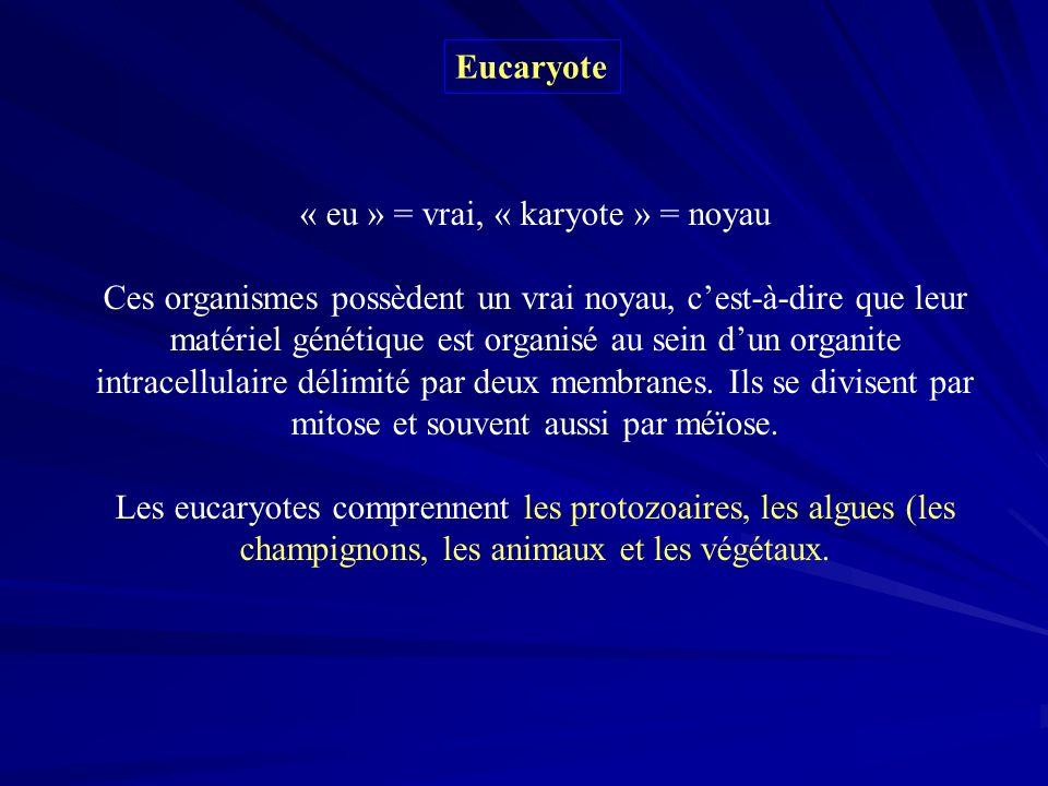 Eucaryote « eu » = vrai, « karyote » = noyau Ces organismes possèdent un vrai noyau, cest-à-dire que leur matériel génétique est organisé au sein dun