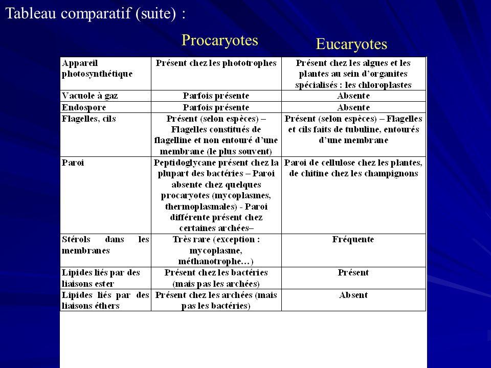 Procaryotes Eucaryotes Tableau comparatif (suite) :