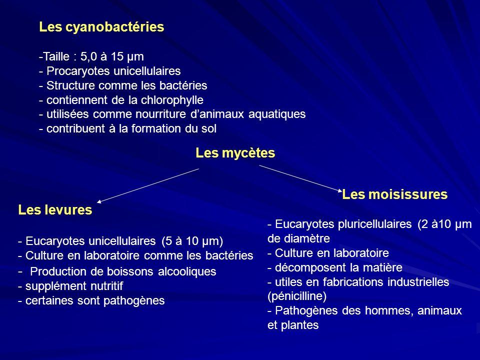 Les cyanobactéries -Taille : 5,0 à 15 µm - Procaryotes unicellulaires - Structure comme les bactéries - contiennent de la chlorophylle - utilisées com