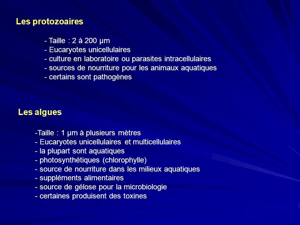 Les protozoaires - Taille : 2 à 200 µm - Eucaryotes unicellulaires - culture en laboratoire ou parasites intracellulaires - sources de nourriture pour