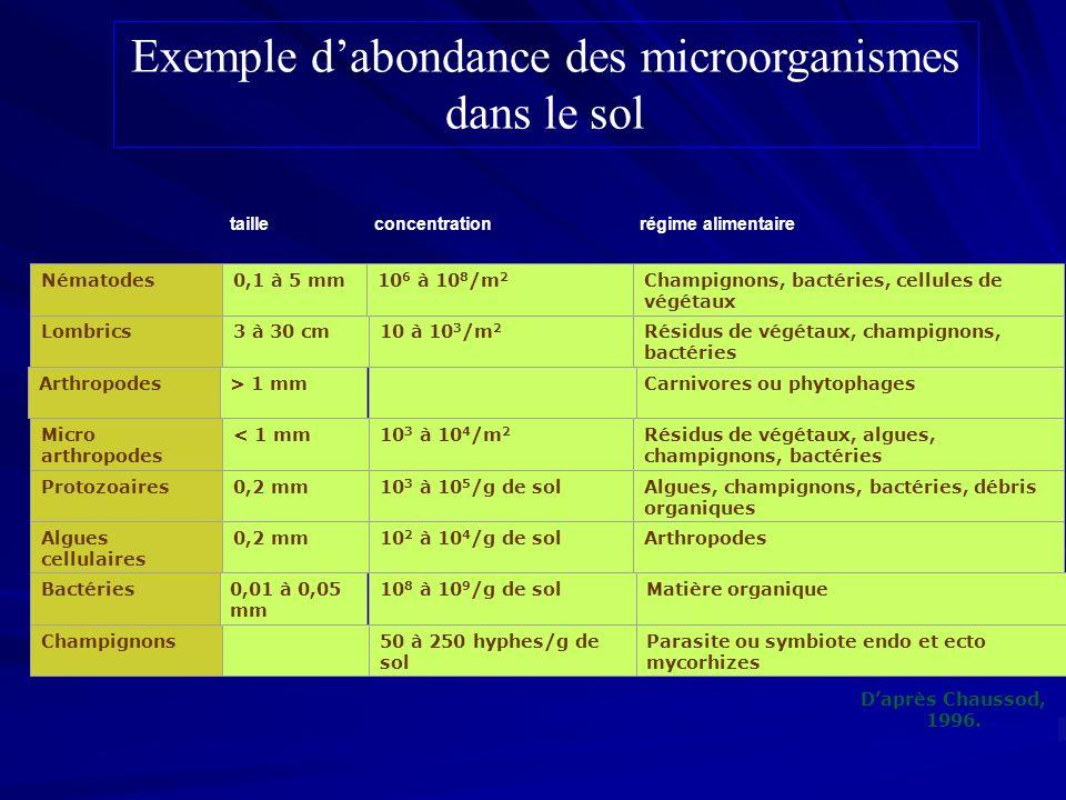 Carnivores ou phytophages Parasite ou symbiote endo et ecto mycorhizes 0,2 mm 10 2 à 10 4 /g de sol Lombrics3 à 30 cm Nématodes0,1 à 5 mm10 6 à 10 8 /