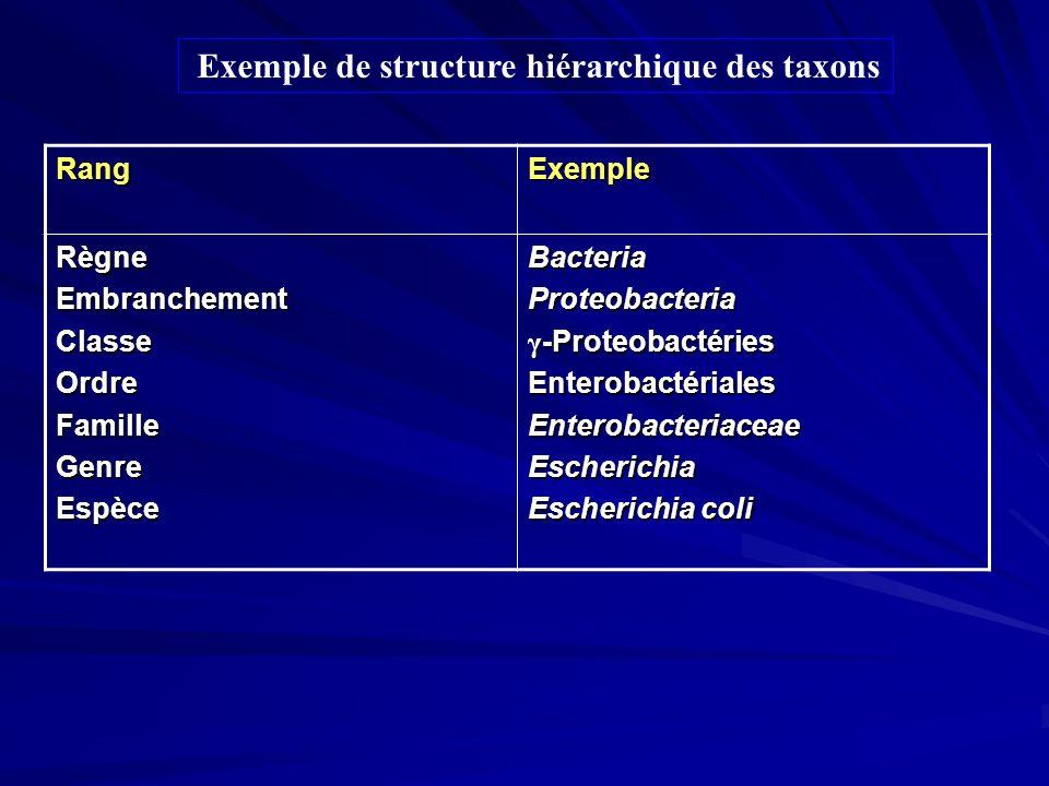 ExempleRang BacteriaProteobacteria γ -Proteobactéries EnterobactérialesEnterobacteriaceaeEscherichia Escherichia coli RègneEmbranchementClasseOrdreFam