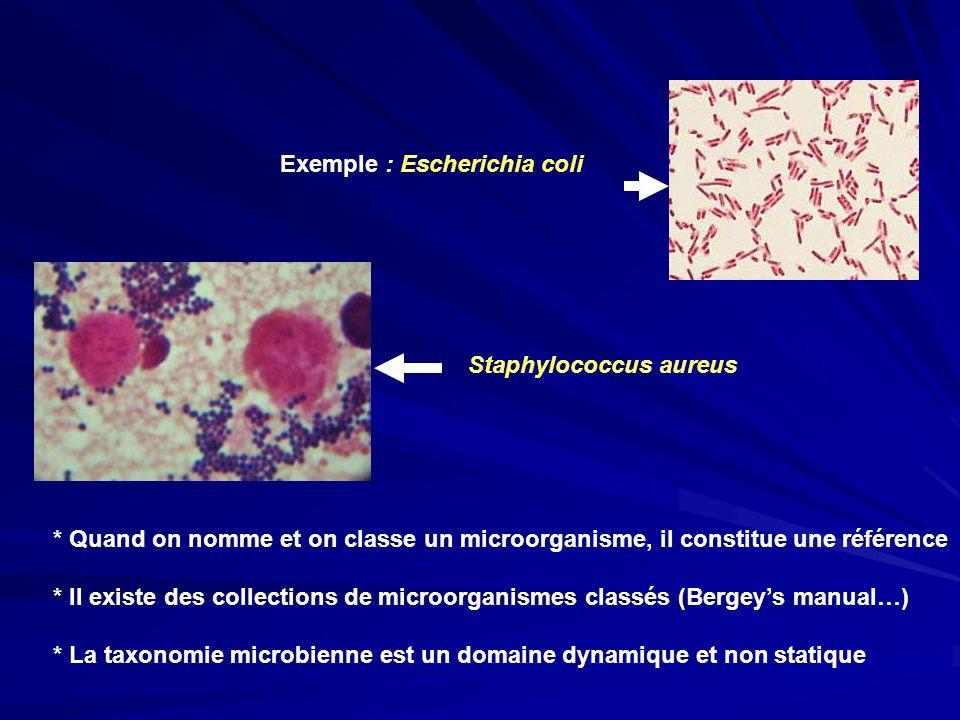 * Quand on nomme et on classe un microorganisme, il constitue une référence * Il existe des collections de microorganismes classés (Bergeys manual…) *