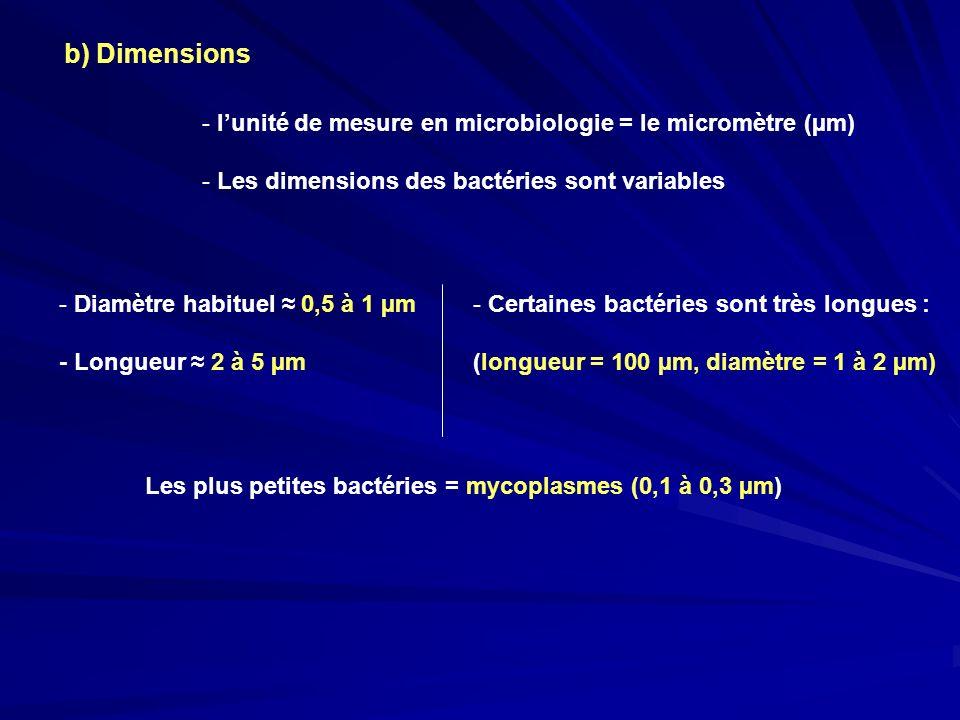 b) Dimensions - Diamètre habituel 0,5 à 1 µm - Longueur 2 à 5 µm - lunité de mesure en microbiologie = le micromètre (µm) - Les dimensions des bactéri