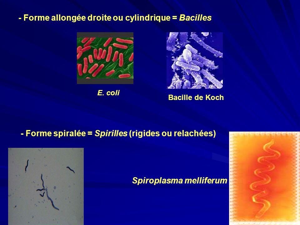 - Forme allongée droite ou cylindrique = Bacilles E. coli Bacille de Koch - Forme spiralée = Spirilles (rigides ou relachées) Spiroplasma melliferum