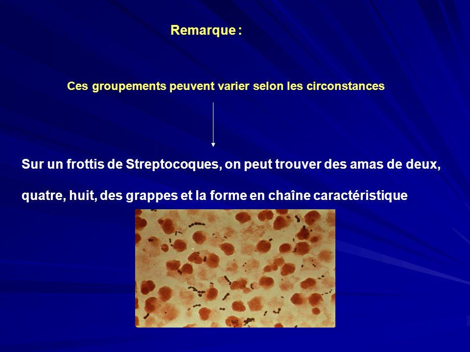 Remarque : Ces groupements peuvent varier selon les circonstances Sur un frottis de Streptocoques, on peut trouver des amas de deux, quatre, huit, des