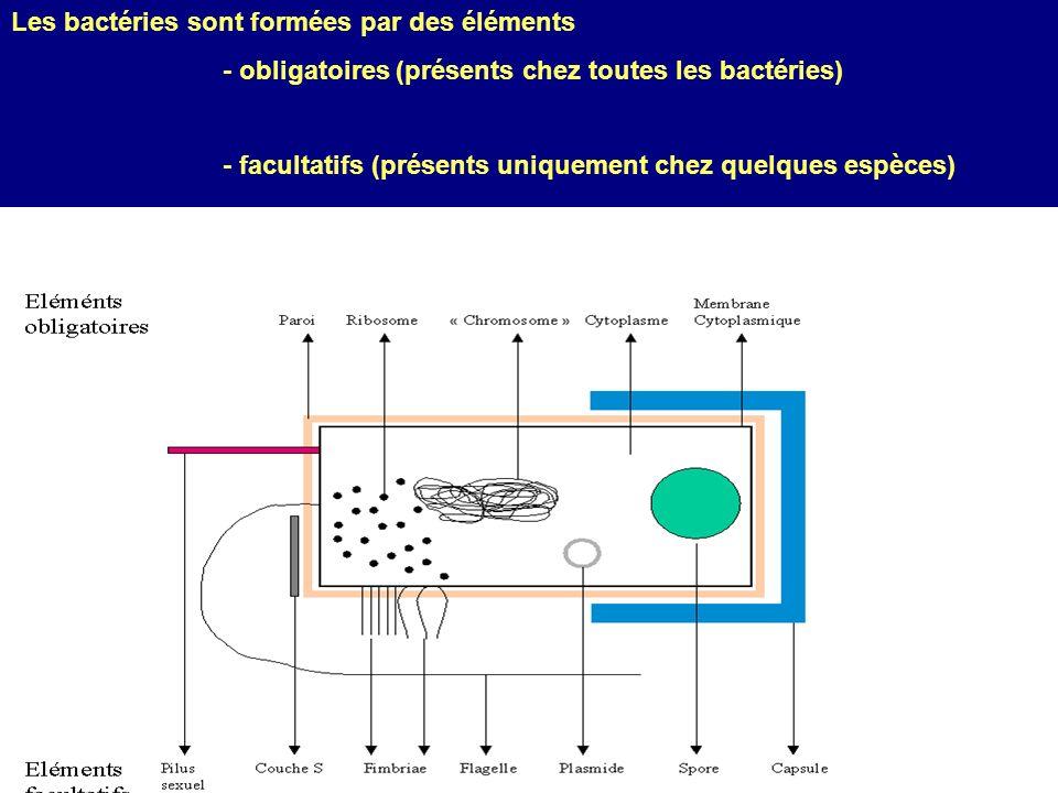 Les bactéries sont formées par des éléments - obligatoires (présents chez toutes les bactéries) - facultatifs (présents uniquement chez quelques espèc