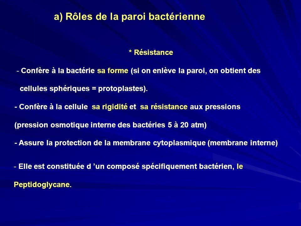 * Résistance - Confère à la bactérie sa forme (si on enlève la paroi, on obtient des cellules sphériques = protoplastes). - Confère à la cellule sa ri
