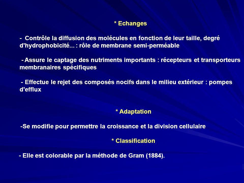 * Echanges - Contrôle la diffusion des molécules en fonction de leur taille, degré d'hydrophobicité... : rôle de membrane semi-perméable - Assure le c