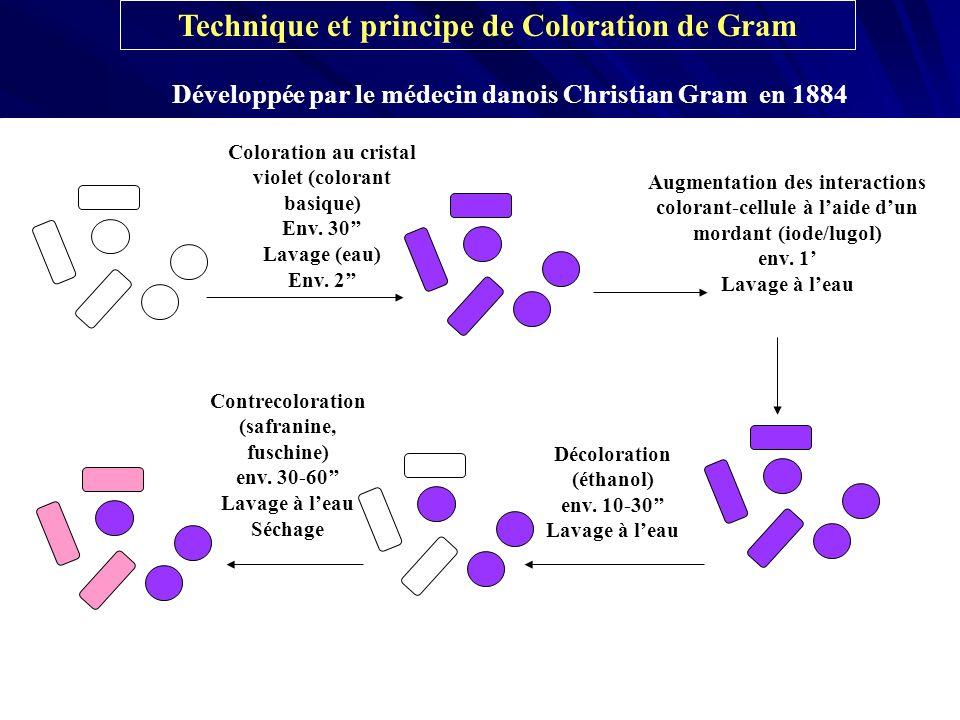 Technique et principe de Coloration de Gram Développée par le médecin danois Christian Gram en 1884 Coloration au cristal violet (colorant basique) En