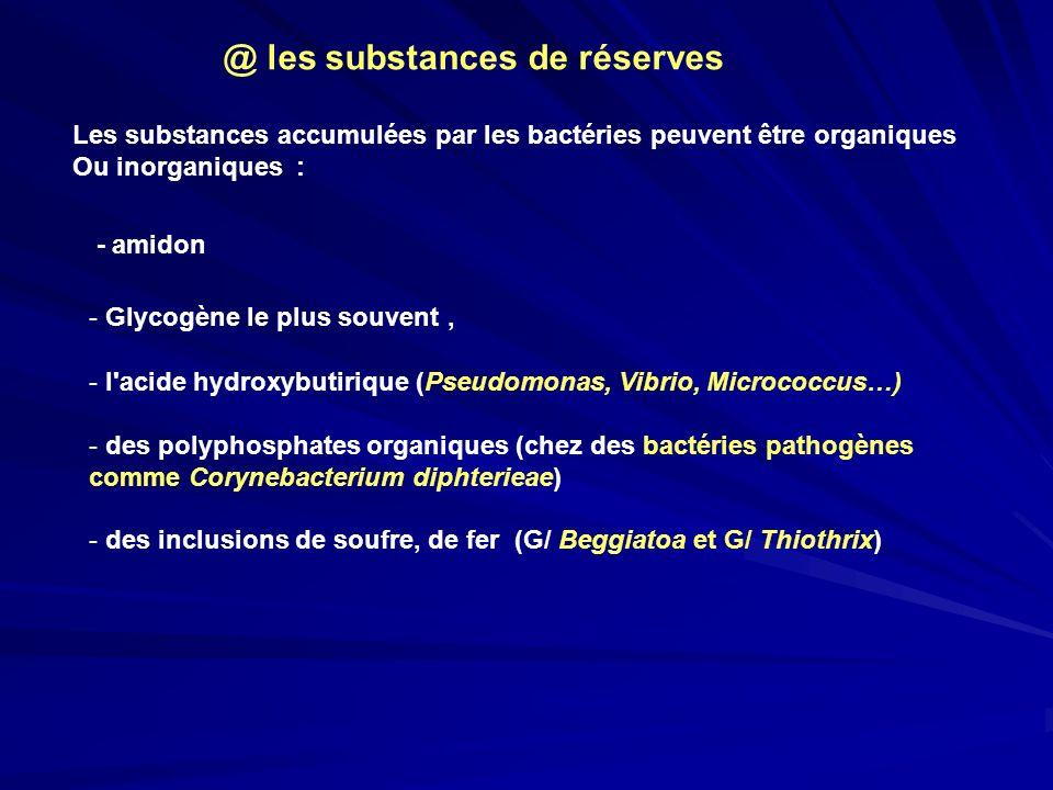 - amidon - Glycogène le plus souvent, - l'acide hydroxybutirique (Pseudomonas, Vibrio, Micrococcus…) - des polyphosphates organiques (chez des bactéri