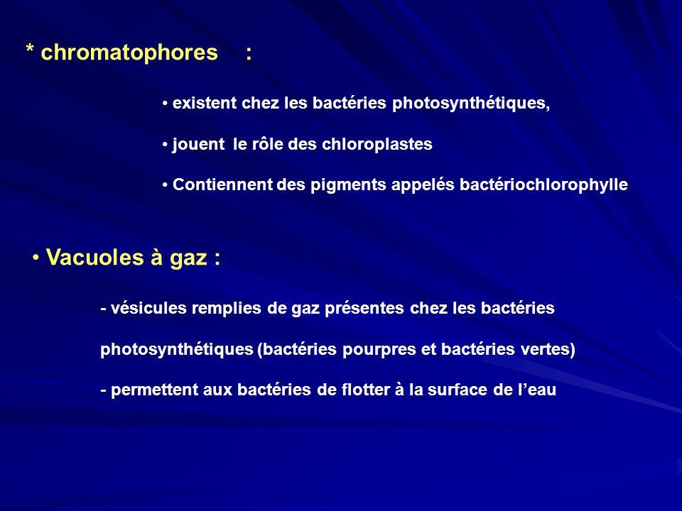 * chromatophores : existent chez les bactéries photosynthétiques, jouent le rôle des chloroplastes Contiennent des pigments appelés bactériochlorophyl