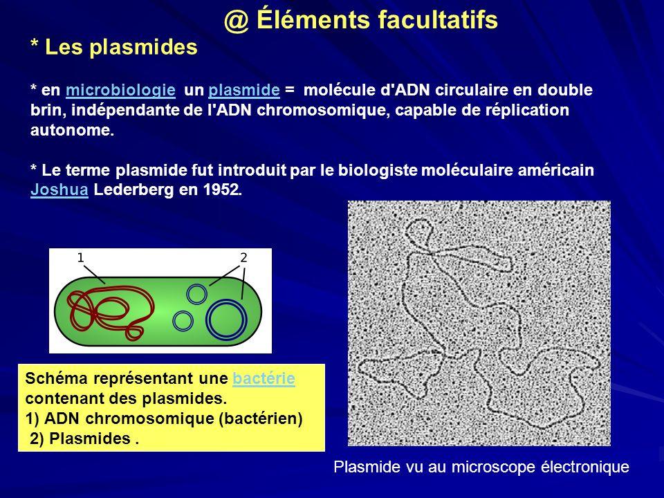 * Les plasmides * en microbiologie un plasmide = molécule d'ADN circulaire en double brin, indépendante de l'ADN chromosomique, capable de réplication