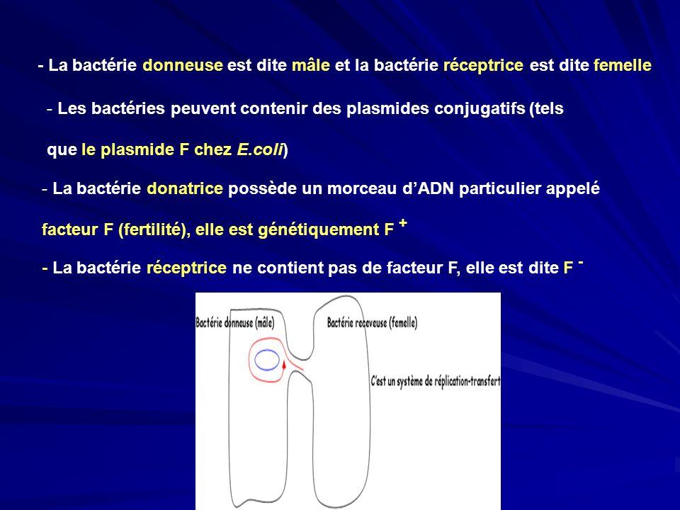 - La bactérie donatrice possède un morceau dADN particulier appelé facteur F (fertilité), elle est génétiquement F + - La bactérie réceptrice ne conti