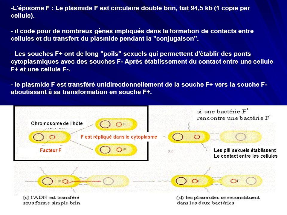 -L'épisome F : Le plasmide F est circulaire double brin, fait 94,5 kb (1 copie par cellule). - il code pour de nombreux gènes impliqués dans la format