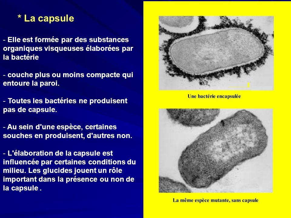 * La capsule - Elle est formée par des substances organiques visqueuses élaborées par la bactérie - couche plus ou moins compacte qui entoure la paroi