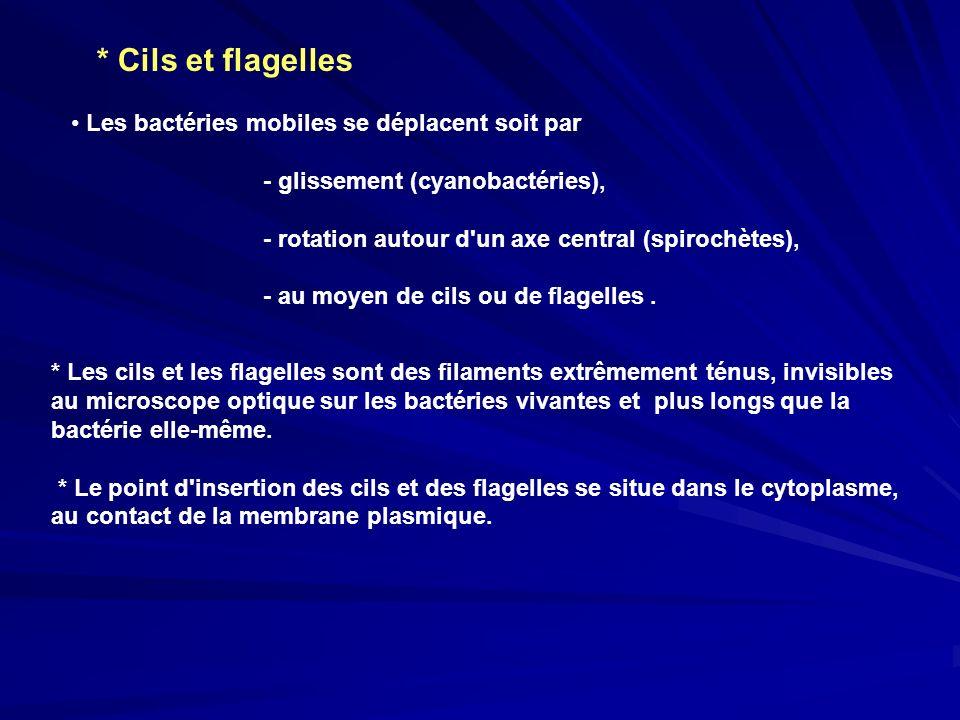 * Cils et flagelles Les bactéries mobiles se déplacent soit par - glissement (cyanobactéries), - rotation autour d'un axe central (spirochètes), - au