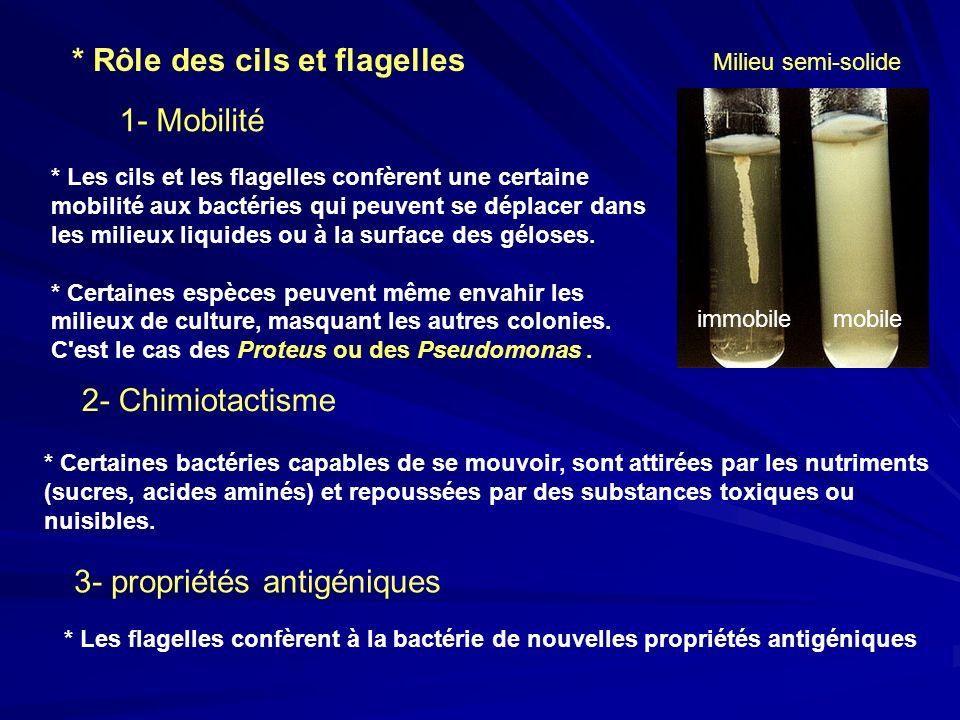 * Les cils et les flagelles confèrent une certaine mobilité aux bactéries qui peuvent se déplacer dans les milieux liquides ou à la surface des gélose