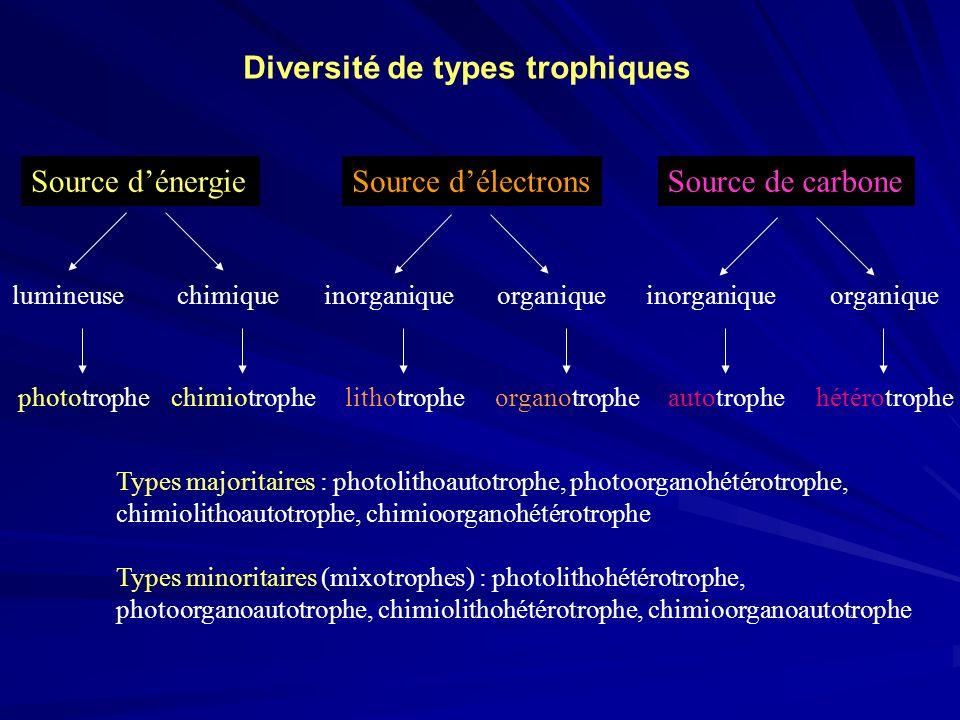 Source dénergieSource délectronsSource de carbone lumineusechimique inorganiqueorganiqueinorganiqueorganique phototrophechimiotrophe lithotropheorgano