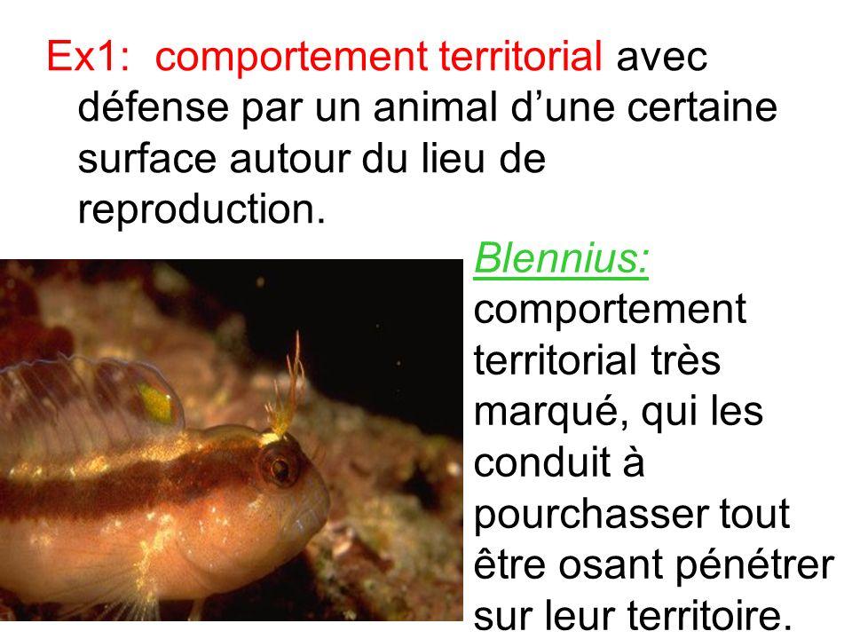 Ex1: comportement territorial avec défense par un animal dune certaine surface autour du lieu de reproduction. Blennius: comportement territorial très