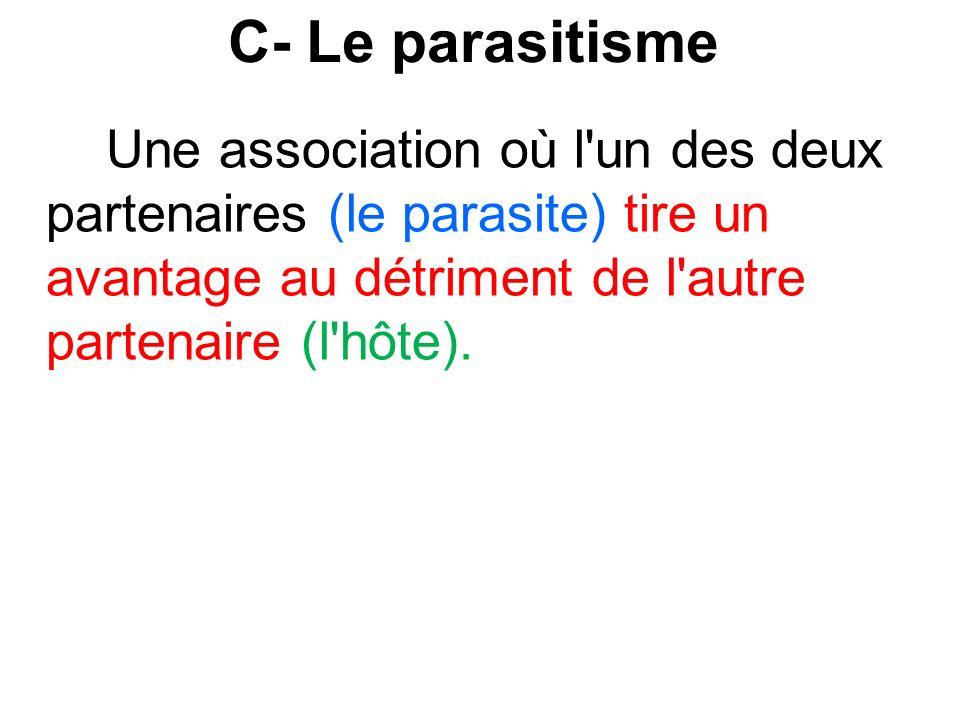 C- Le parasitisme Une association où l'un des deux partenaires (le parasite) tire un avantage au détriment de l'autre partenaire (l'hôte).