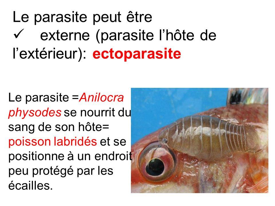 Le parasite =Anilocra physodes se nourrit du sang de son hôte= poisson labridés et se positionne à un endroit peu protégé par les écailles. Le parasit