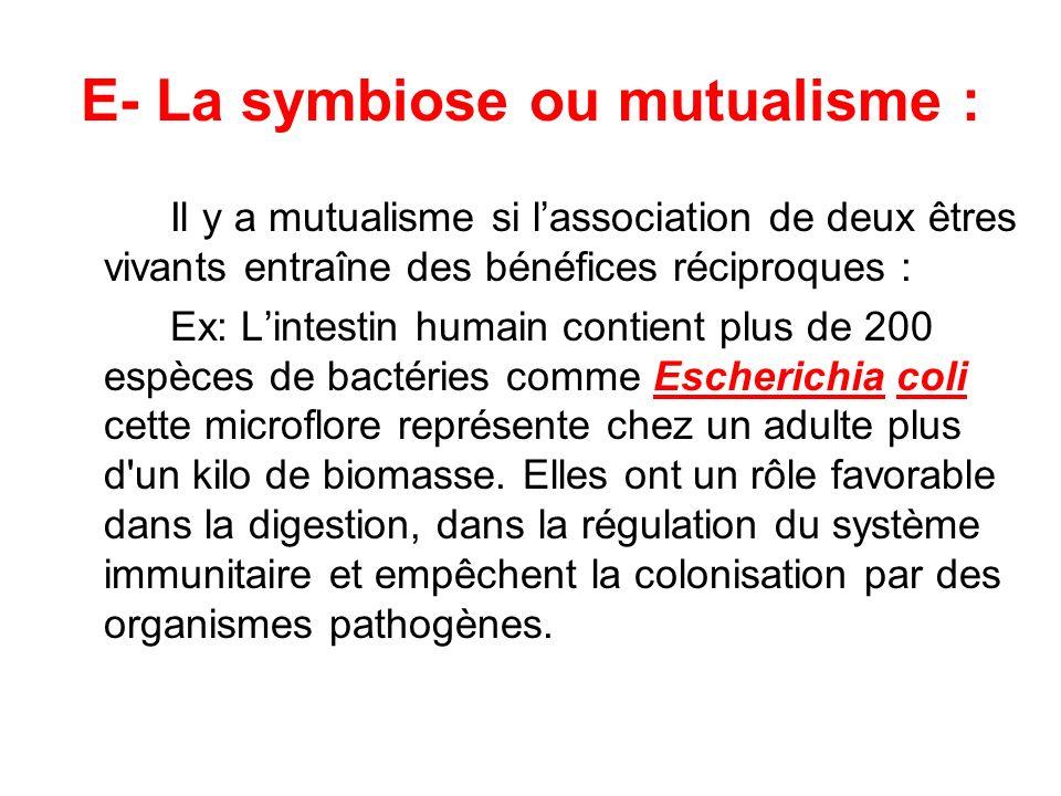 E- La symbiose ou mutualisme : Il y a mutualisme si lassociation de deux êtres vivants entraîne des bénéfices réciproques : Ex: Lintestin humain conti