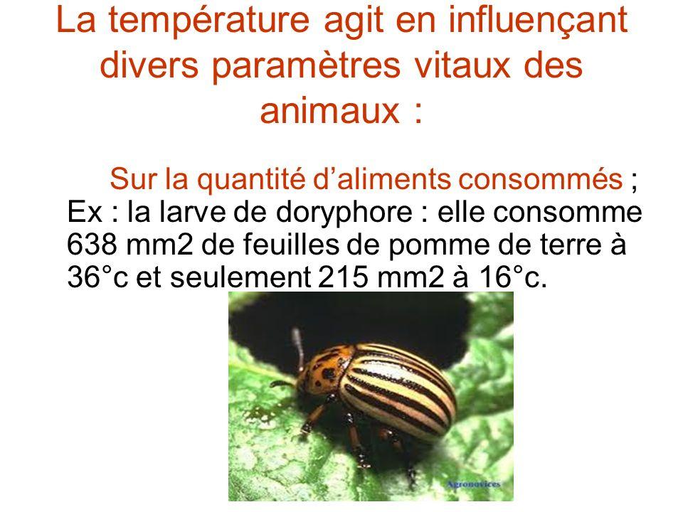 La température agit en influençant divers paramètres vitaux des animaux : Sur la quantité daliments consommés ; Ex : la larve de doryphore : elle cons