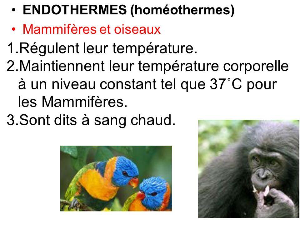 ENDOTHERMES (homéothermes) Mammifères et oiseaux 1.Régulent leur température. 2.Maintiennent leur température corporelle à un niveau constant tel que