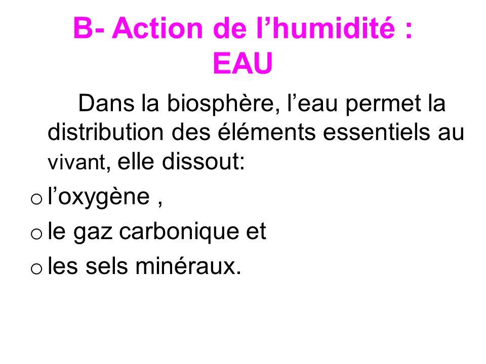 B- Action de lhumidité : EAU Dans la biosphère, leau permet la distribution des éléments essentiels au vivant, elle dissout: o loxygène, o le gaz carb