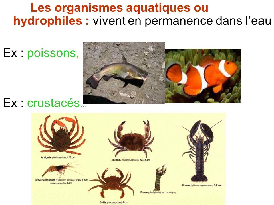 Les organismes aquatiques ou hydrophiles : vivent en permanence dans leau Ex : poissons, Ex : crustacés …