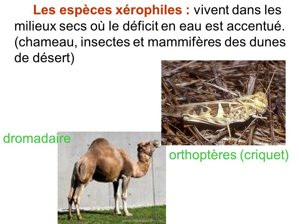 Les espèces xérophiles : vivent dans les milieux secs où le déficit en eau est accentué. (chameau, insectes et mammifères des dunes de désert) dromada