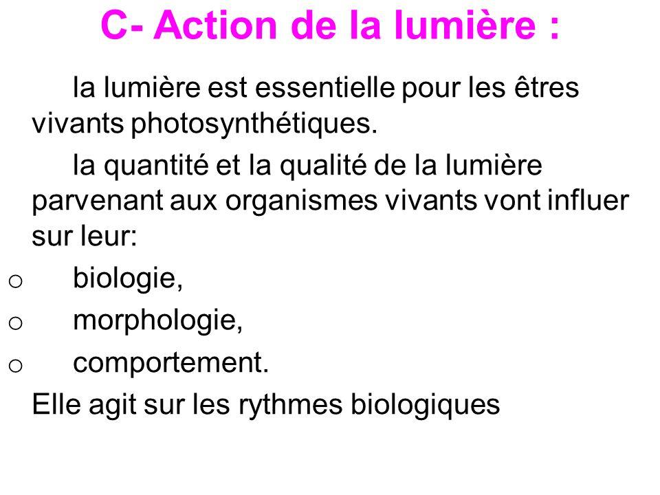 C- Action de la lumière : la lumière est essentielle pour les êtres vivants photosynthétiques. la quantité et la qualité de la lumière parvenant aux o