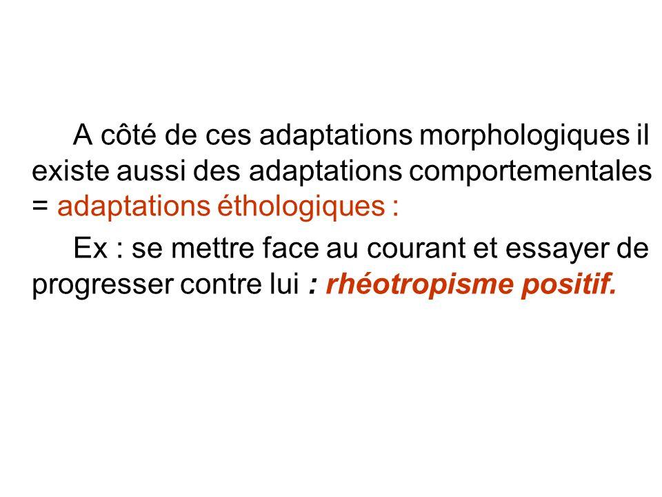 A côté de ces adaptations morphologiques il existe aussi des adaptations comportementales = adaptations éthologiques : Ex : se mettre face au courant